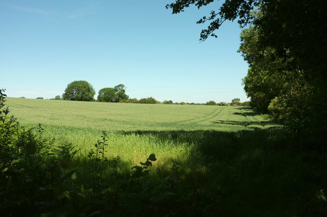 Wheat by Ripon Rowel Walk
