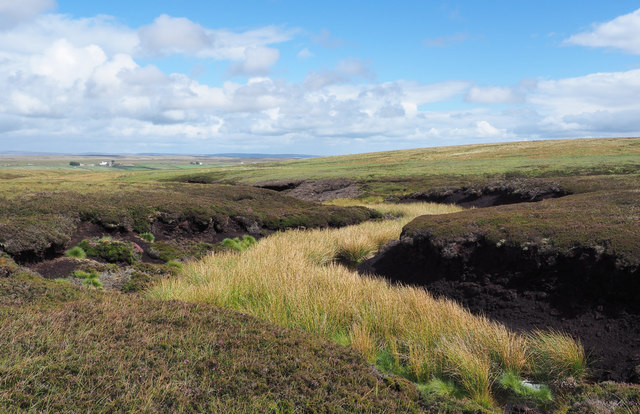 Rush-filled groove between peat banks