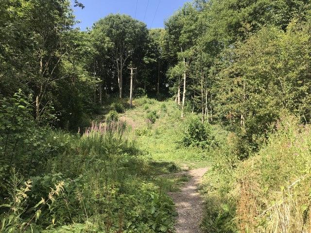 Leddy's Field