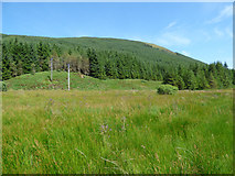 NS0883 : Power lines in Glen Lean by Thomas Nugent