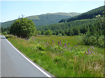 NS0982 : Glen Lean by Thomas Nugent