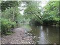 NS9897 : The River Devon below Vicar's Bridge by Jonathan Thacker