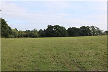 TQ0625 : Field by Billingshurst Road by David Howard