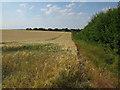 TL4037 : Barley field by Hugh Venables