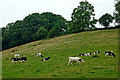 SP6587 : Pasture and woodland south of Laughton in Leicestershire by Roger  Kidd
