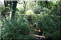 TL8107 : Stream and Footbridges by Paul Franks