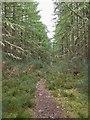 NH5651 : Path in Spital Wood by valenta