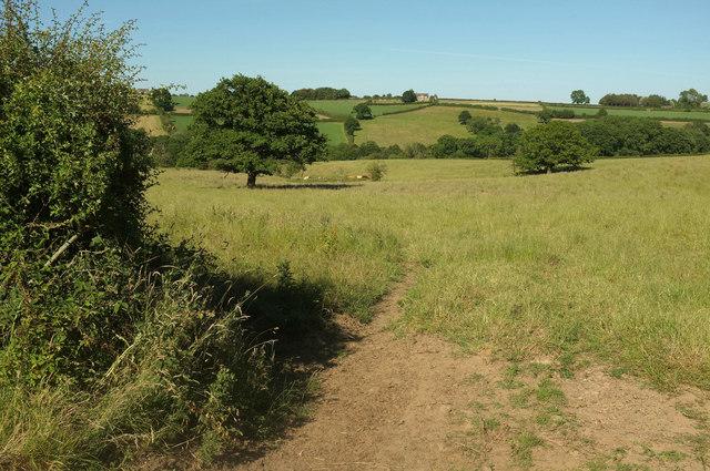 Cattle pasture below Brackenthwaite