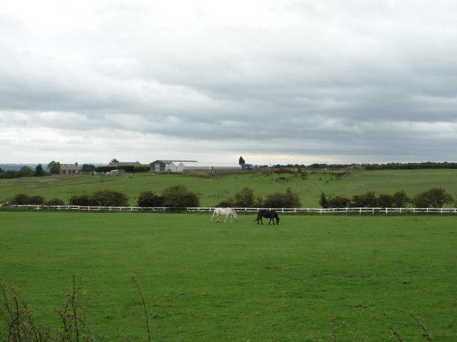 Grazing south of Mount Lane