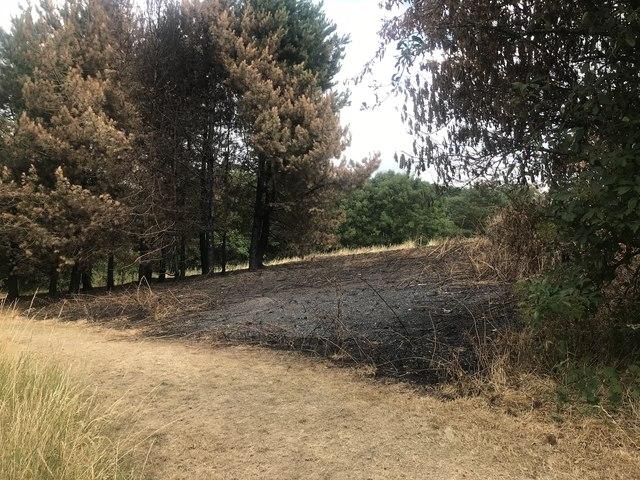Burnt grassland in Central Forest Park