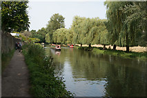 SU9948 : River Wey, near Guildford by Julian Osley