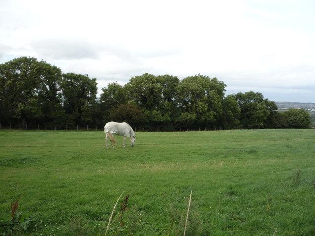 Grazing and woodland, Offerton