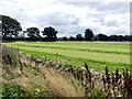 SK8773 : Turf field at Springwood Farm by Graham Hogg