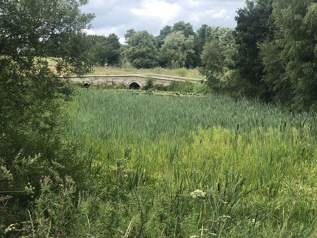 Reedy pond and bridge in Cholmondeley Park