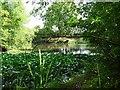 SK5325 : Fish pond by Ian Calderwood