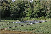 SU5632 : Watercress beds by West Lea Farm, Itchen Stoke by David Howard