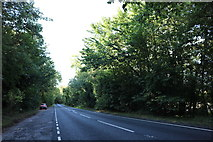 SU4534 : The A272 north of Littleton by David Howard