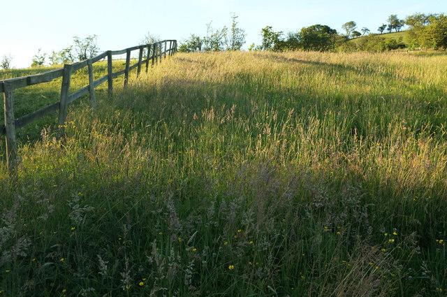 Meadow near Oak Bank Farm