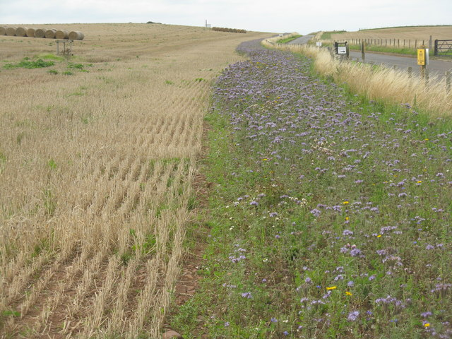 Biodiverse field margin