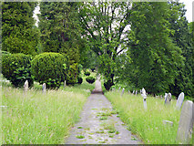 SU9948 : Path, The Mount cemetery, Guildford by Robin Webster