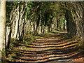 SU8911 : Goodwood Chalk Road by Chris Gunns