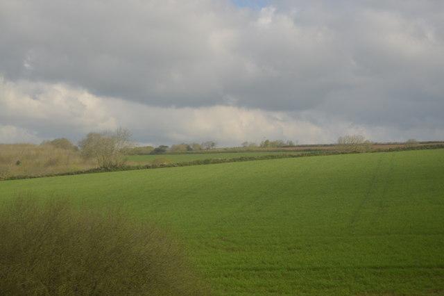 Cornish Pasture