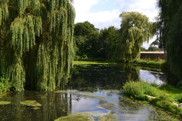 Weeping willows at The Vyne