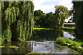 SU6357 : Weeping willows at The Vyne by David Martin
