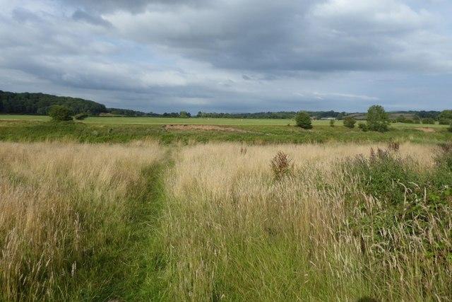 Grassland beside the river