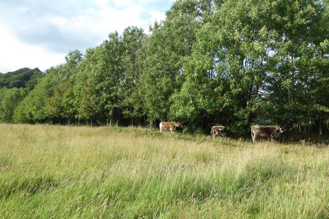 Cattle sheltering