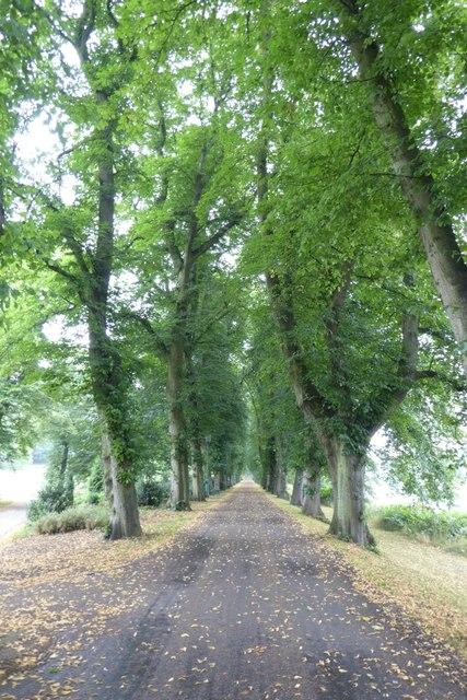 Tree-line path in Avenham Park