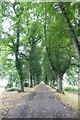 SD5328 : Tree-line path in Avenham Park by DS Pugh