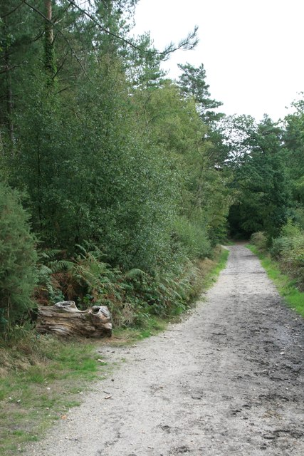 Footpath through Bovington Camp