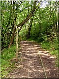 SK3455 : Former mineral railway at Crich Tramway Museum by Graham Hogg