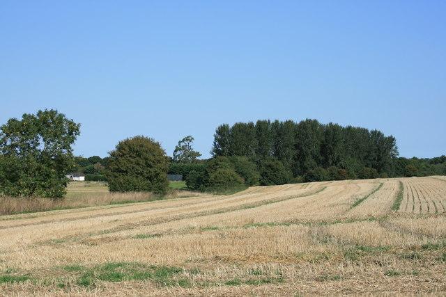 Stubble Field Beside Peterfield's Lane
