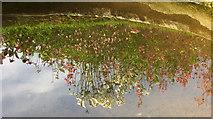 SX9050 : Reflection in Rill Garden, Coleton Fishacre by Derek Harper