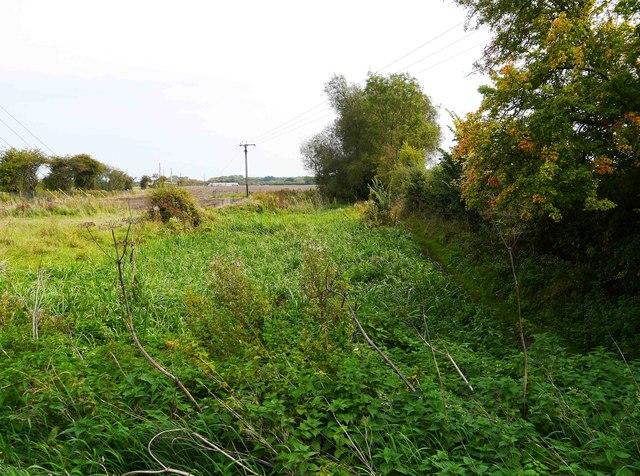 Overgrown canal near Royal Wootton Bassett, Wilts