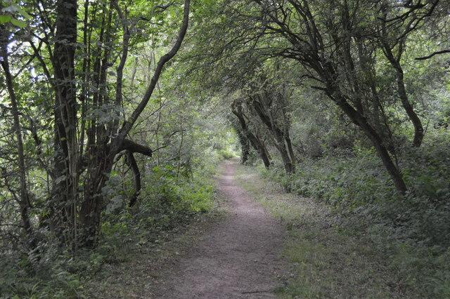 Thames Path, Wytham Woods