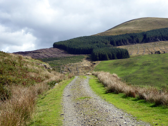 Climbing on the forestry road to Briddellarw