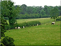SP6989 : Pasture west of Foxton in Leicestershire by Roger  Kidd