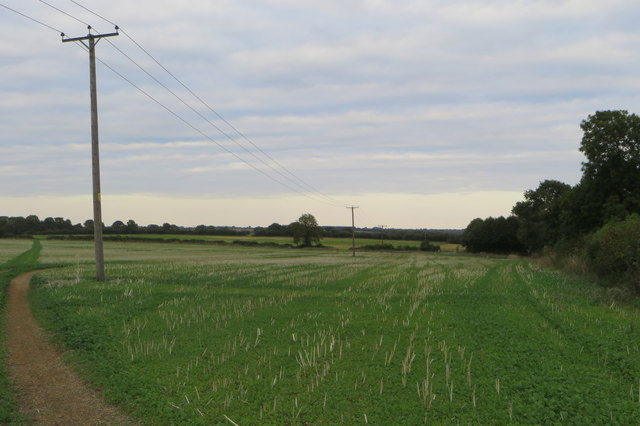 Powerlines over the bridleway