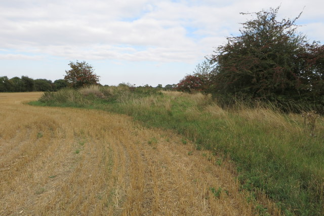 Wartime airfield defences in a wheatfield
