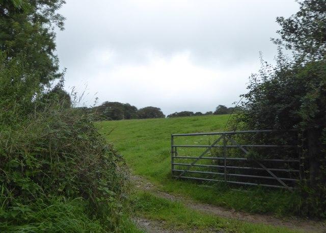 Field of grass on Winford Hill