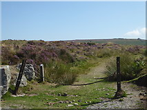 SX6781 : Dartmoor near Warren House by Chris Allen