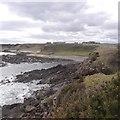 NH9487 : Wilkhaven by Richard Webb