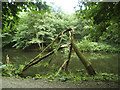 SE1238 : Broken tree in the River Aire by Stephen Craven