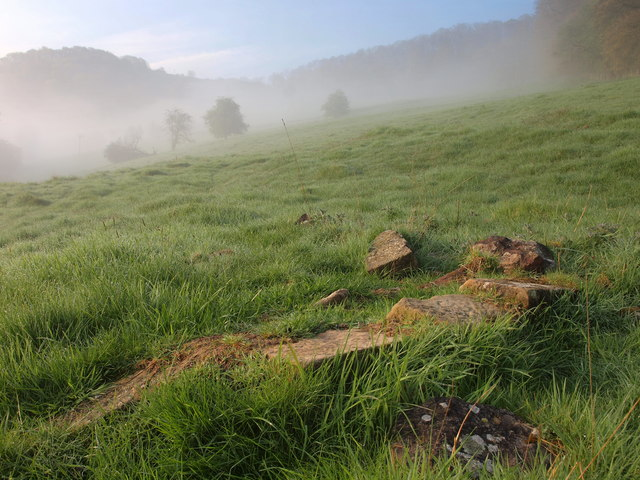 Foggy morning in a Lydbrook Field