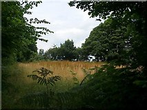 ST4297 : Small field at Golden Hill by Jonathan Billinger