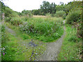 NS4365 : Footpaths at Linwood Moss by Thomas Nugent