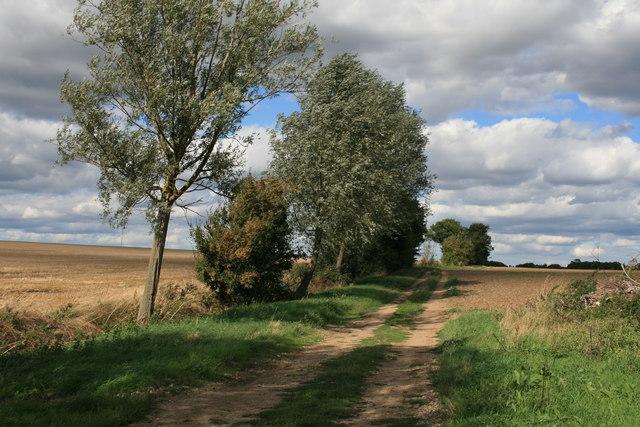 Farm Track near Culvert's Farm